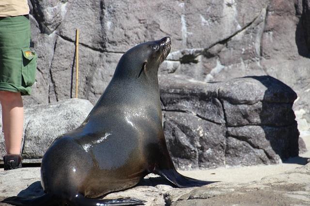Jyllands Park Zoo