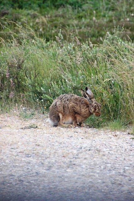 Dieser kleine Hase hat uns fast jeden Tag am Ferienhaus besucht...