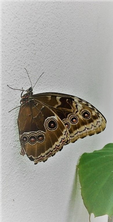 schmetterling-i