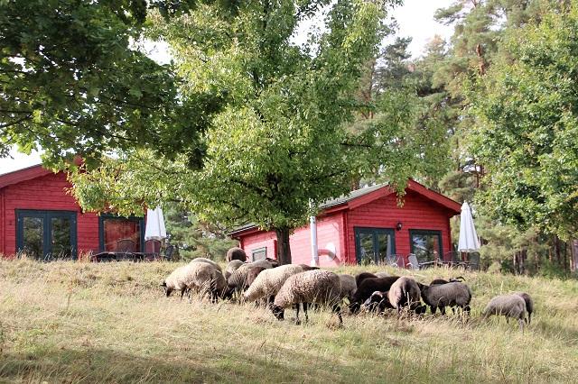 Biber Ferienhof - ein kleines Bullerbü an der Mecklenburgische Seenplatte mit Kindern
