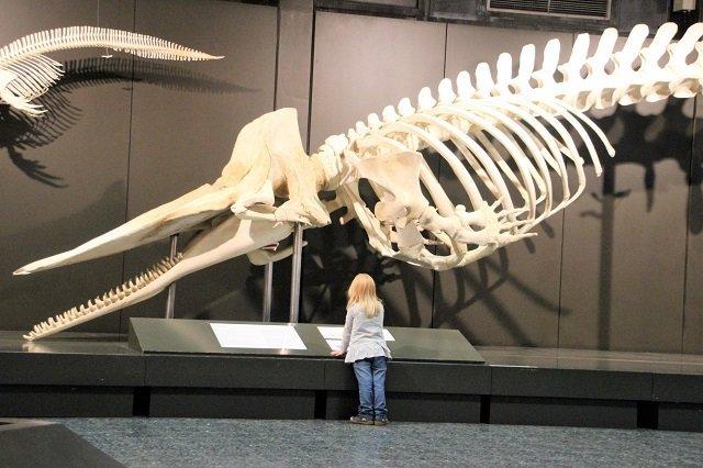 Zoologisches Museum-Hamburg