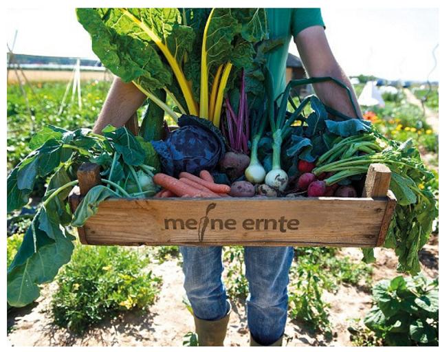 meine ernte Gemüsegarten mieten