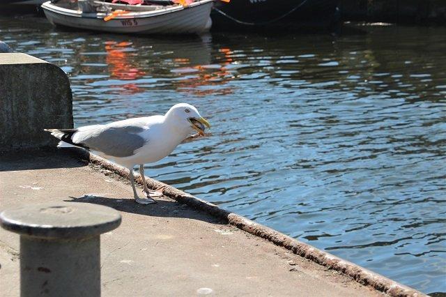 Boltenhagen_Wismar-Hafen