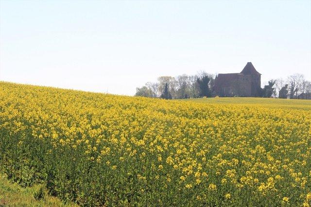 Ostsee-Rapsfelder I