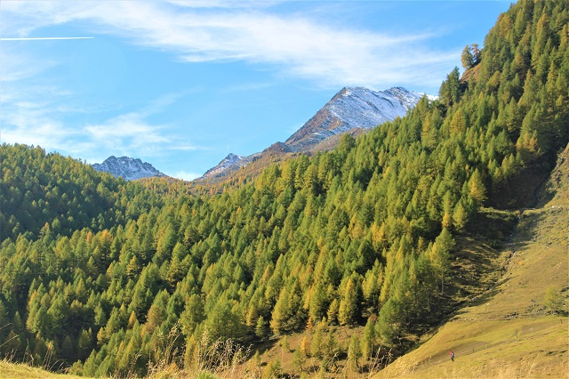 Fanealm Südtirol