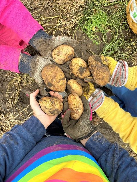Kartoffeln buddeln Gut Wulksfelde